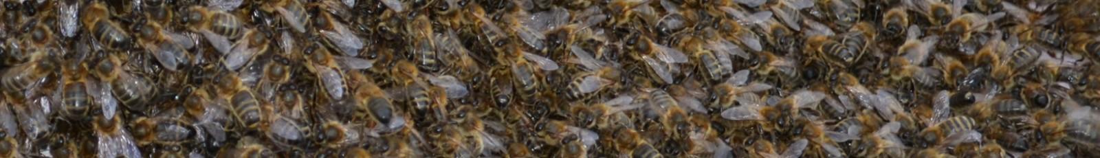 Ryedale Beekeepers Association